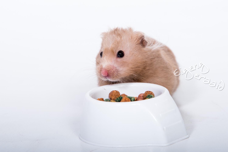 Ook de hamster kan op de foto, al moet je wel erg snel zijn met deze bewegelijke diertjes